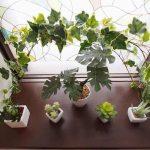 横浜 貸し会議室 レンタルスペース ワイナリー お手洗いの観葉植物
